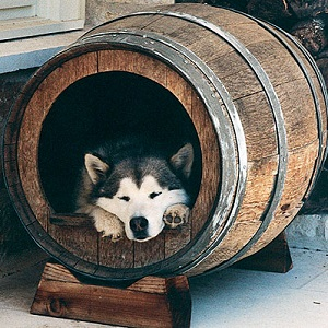 Barrel Dog Houses